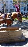 Giri in Central Park, NYC, NY, U.S.A. della depressione, del cavallo e del trasporto dell'acqua di ASPCA Fotografia Stock Libera da Diritti