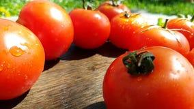 Giri del rallentatore dell'acqua del gocciolamento di cadute dei pomodori video d archivio