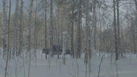 Giri dell'automobile su un sentiero forestale di inverno Un'automobile in una strada innevata fra gli alberi stock footage