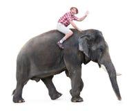 Giri felici del turista su un elefante Immagine Stock Libera da Diritti