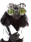 girig hund Arkivbilder
