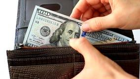 Giriga skinn hundra dollar tillbaka till plånboken arkivfilmer