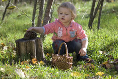 The girl. Of two years plays to wood with cones Royalty Free Stock Image