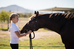 Girl adjusting the muzzle of the horse in the ranch Royalty Free Stock Image