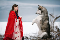Girl with alaskan malamute dog wrapped  in blanket and train dog. Girl with alaskan malamute dog wrapped  in white-red blanket. They sit near winter lake. Dog Stock Photography