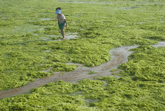 girl in Algae Stock Photography