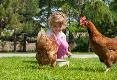 Girl And Chicken Stock Photo