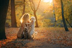 Free Girl And Two Dogs In An Autumn Park At Sunset.. Walking With Pet. Toy And Small Poodle Royalty Free Stock Images - 201992659