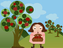Girl in apple orchard. Vector illustration of a cartoon style girl in apple orchard collecting apples Stock Photo