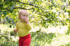 Girl in apple orchard. Baby girl biting an apple in the apple orchard stock images