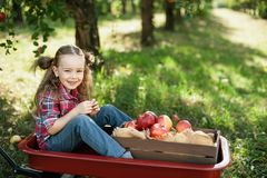 Girl with Apple in the Apple Orchard Stock Photo