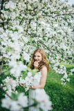 A girl in an apple orchard Stock Photography