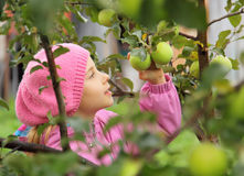 The girl and an apple-tree. The girl tears an apple from an apple-tree royalty free stock image