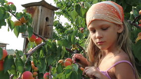 Girl and a apricots stock footage