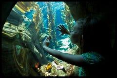 Girl in aquarium. Young girl look through aquarium tank Stock Images