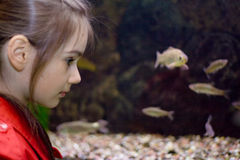 Girl aquarium. Little girl looks aquarium fish face close-up view direction Royalty Free Stock Images