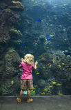 Girl at Aquarium Glass Stock Photography