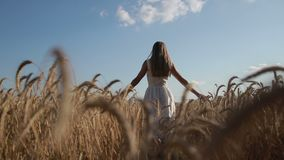 Girl with arms outstretched walking on wheat field stock video