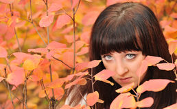 The girl in an autumn forest Royalty Free Stock Photos
