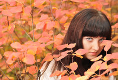 The girl in an autumn forest Stock Photo