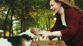 Girl in the autumn park playing with the dog fox terrier stock video footage