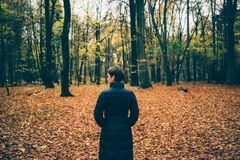 Girl in the autumn woods Stock Photo