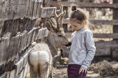 Girl with a baby deer in a pen is caring and take care