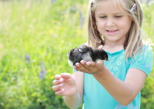 Girl with baby duck. Smiling little girl in blue dress holding a baby duck in one hand stock photo
