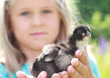 Girl with baby duck. Seriouse little girl in blue dress holding a baby duck in two hands royalty free stock photos