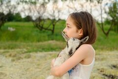 Girl with baby goat on farm outdoors. Village animals. happy child hugs goat, concept of unity of nature and man