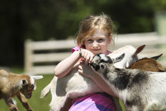 Girl and Baby Goats Royalty Free Stock Photography