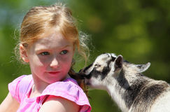 Girl and Baby Goats. Seven-Year girl and baby goat royalty free stock images