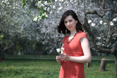 Girl on a background of apple blossom. Girl in a red dress with a sprig of apple in his hands against the backdrop of flowering trees Stock Image