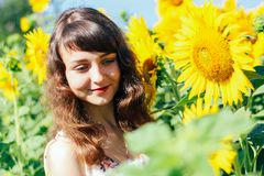 Girl in the background of the sunflower stock photos