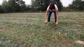 A girl with a backpack behind her hands touches the drying hay. Hay lies mowed in rolls.  stock footage