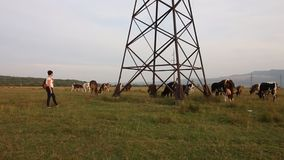 A girl with a backpack behind her looks at a herd of cows. Cows graze in a valley near a power line pylon.  stock footage