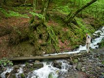 A girl with a backpack on a tourist trail in the forest near the stream royalty free stock photo
