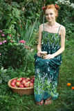 Girl with basket of apples Royalty Free Stock Photos