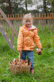 Girl with a basket of ceps Stock Image
