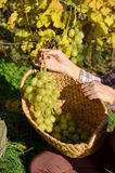Girl with a basket full of grapes Royalty Free Stock Photo