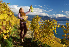Girl with a basket full of grapes. Stock Photos
