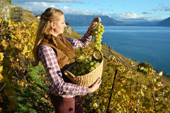Girl with a basket full of grapes Royalty Free Stock Image
