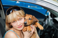 Girl with a Basset Hound. Sitting in the car Royalty Free Stock Image