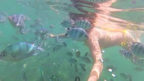 Girl bathe in the sea with fish. Scuba Diving in Masks. Girlswim in the sea with fish. Snorkelling stock video footage