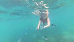 Girl bathe in the sea with fish. Scuba Diving in Masks. PHANGAN, THAILAND. Girl swim in the sea with fish. Snorkelling stock footage