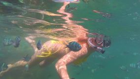 Girl bathe in the sea with fish. Scuba Diving in Masks. Girl swim in the sea with fish. Snorkelling stock video footage
