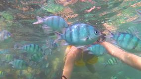 Girl bathe in the sea with fish. Scuba Diving in Masks. Girl swim in the sea with fish. Snorkelling stock footage