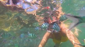 Girl bathe in the sea with fish. Scuba Diving in Masks. Girl swim in the sea with fish. Snorkelling stock video