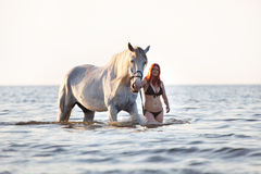 Girl bathing white horse Stock Photo