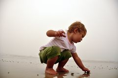 Girl on beach. Young girl picking up shells on beach Royalty Free Stock Photo